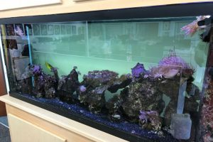 aquarium store boise idaho