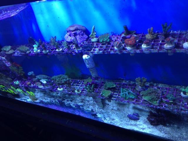 boise idaho aquarium store