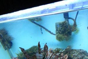 idaho aquarium store
